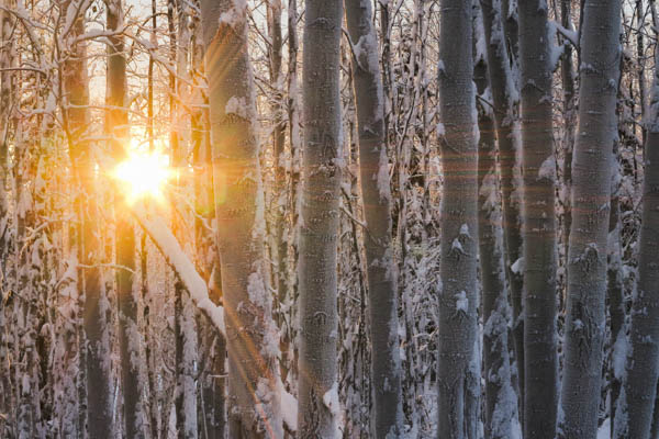 The winter sun in Alaska never gets very high. Here it is seen setting through trees just before 3 p.m.