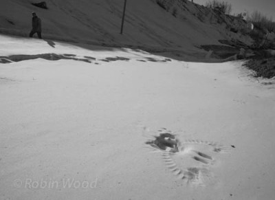 A pedestrian walks up a path at UAF, near a imprint a raven left in the snow, akin to a temporary fossil.