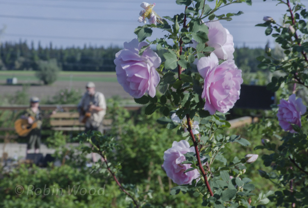 Roses in the foreground, musicians in the background.