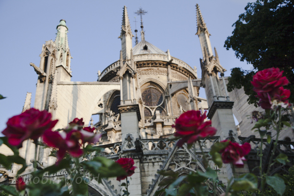 Roses and Notre Dame 2. July 8, 2013.