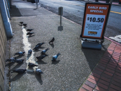 Early birds get the rice adjacent to an early-bird advertisement.