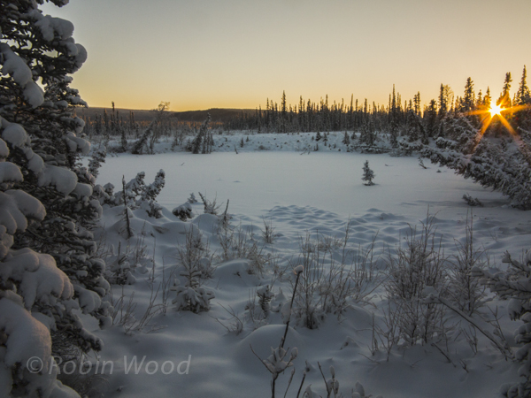 At exactly noon, the sun is already hidden behind some trees, with a frozen lake in the foreground.