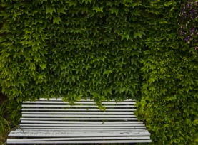 Abstract patterns created by green ivy and a white bench.