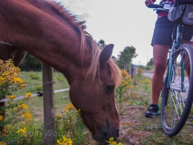 A friendly cheval provided a good opportunity to a little break.