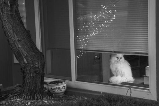 Cat watches world.