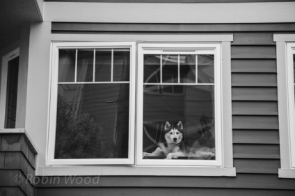 Dog watches world.