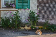 Swiss facade with flowers and feline.