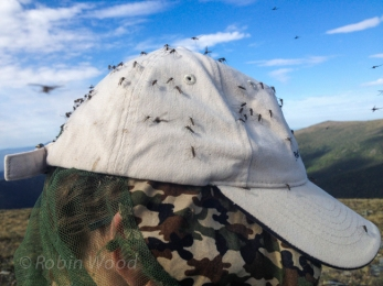 Strong winds kept mosquitos at bay most of the trip. But when mosquitos mass...