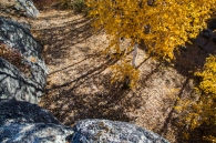 Colorful patterns created by shadows, leafs and rocks result in a busy but fascinating scene.