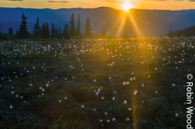 During Alaska's summer the sun often sets past midnight. This picture was taken around 12:30 a.m.