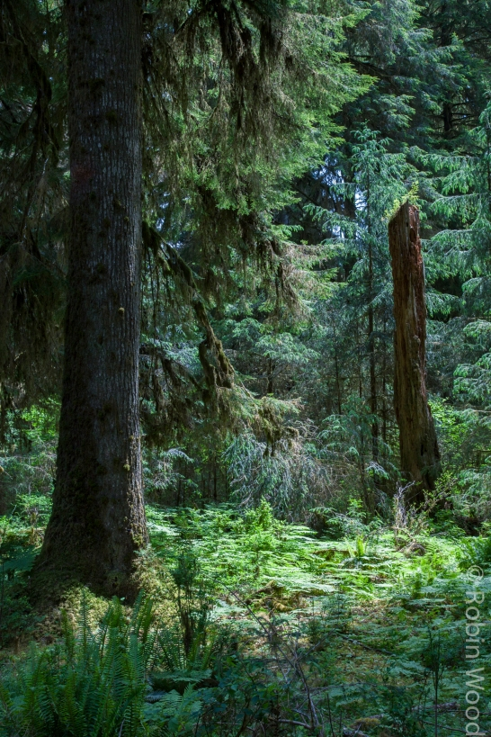 HohRainforest3