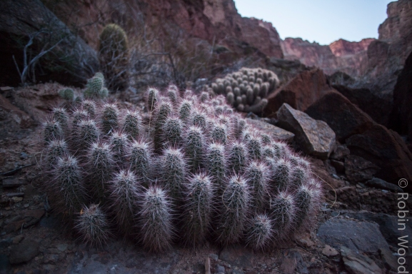 Being from Interior Alaska, I loved viewing and photographing cacti.