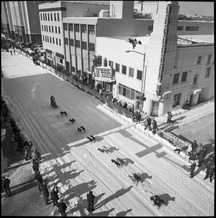 A musher makes their way down Second Avenue in Fairbanks while racing in the Open North American Classic.